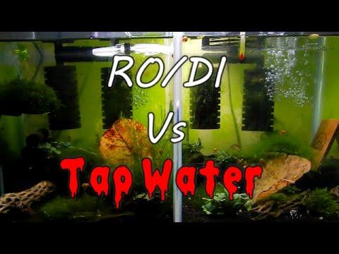 Tap Vs RO/DI Water