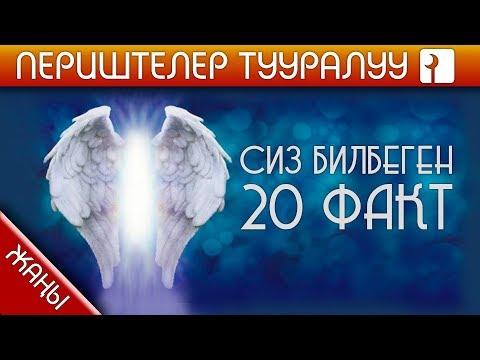 ПЕРИШТЕЛЕР ТУУРАЛУУ 20 ФАКТ
