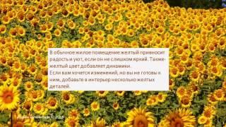 видео Желтый цвет в психологии