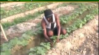 सब्जियों की खेती से खुद को ऐसे करें मालामाल