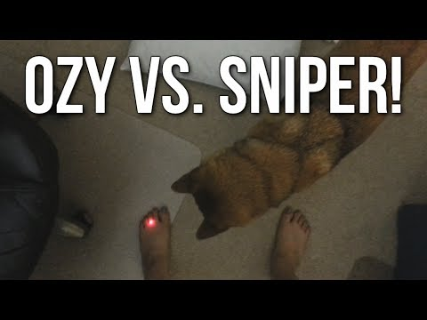 Ozy vs. Sniper! (Shiba Inu Doge vs. Laser Pointer)