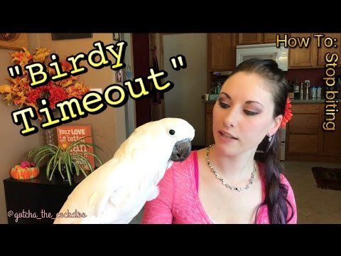How To stop your parrot from biting | Tips to earn trust | Plz See Description! |