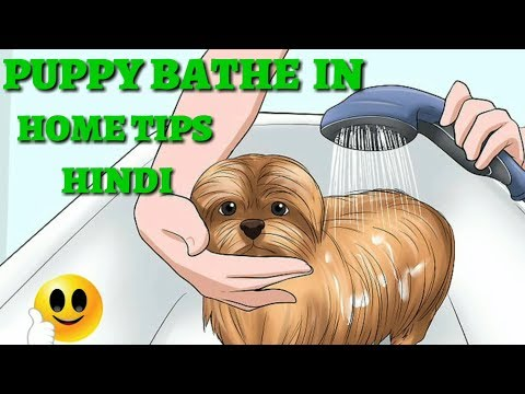 How To Safely Bathe a Puppy at home | Dog Tips & Tricks | | At mix |