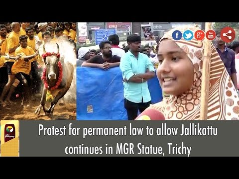 Protest for permanent law to allow Jallikattu continues in MGR Statue, Trichy