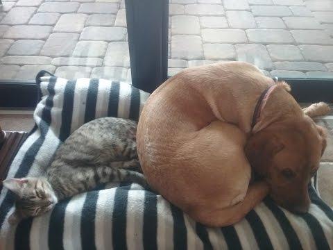 Dog teaches kitten tricks