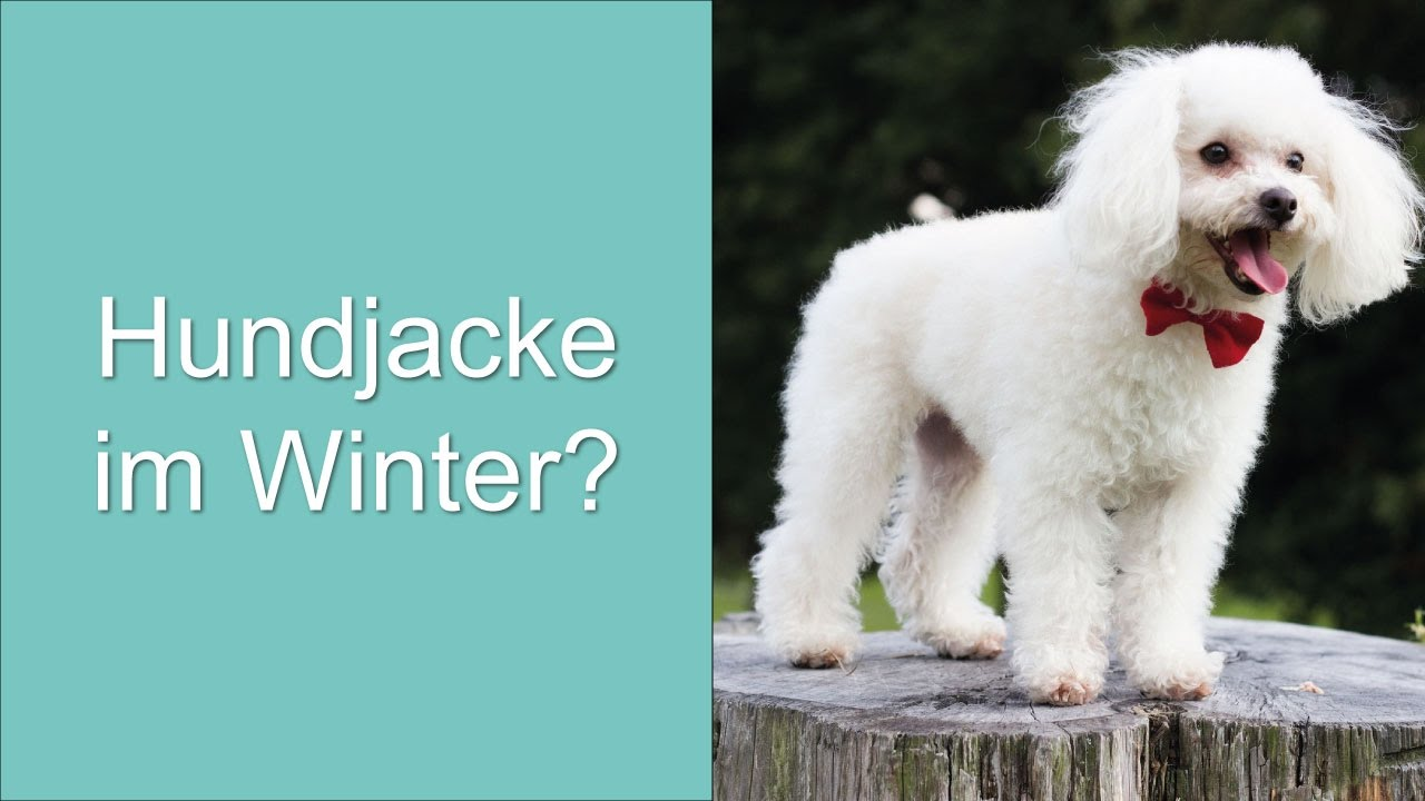 Hundejacke für den Winter? - YouTube