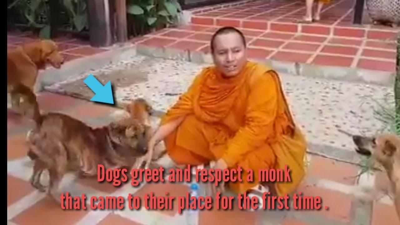 សត្វឆ្កែនៅប្រទេសឡាវឆ្លាតមែនទេីបឃេីញលោកសោះធ្វេីដូចស្គាល់តាំងពីកាលណា៕ Friendly dogs .