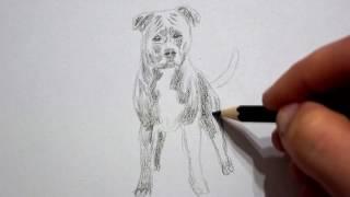 American Staffordshire Bull Terrier zeichnen lernen - Hund malen - how to draw dog - рисовать собаку