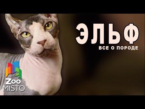 коты ельфы