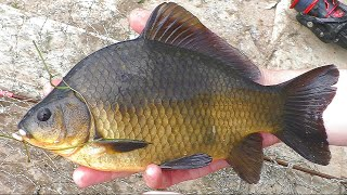 Рыбалка летом в дождь Ловля в июне 2021г на пружину и поплавок My fishing