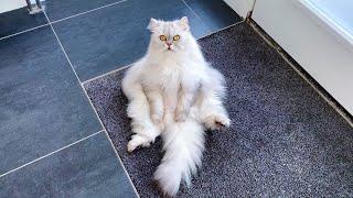 Cat Sitting Like A Human