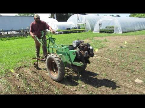 Onion Plants Cultivated With Planet Jr HW Tractor