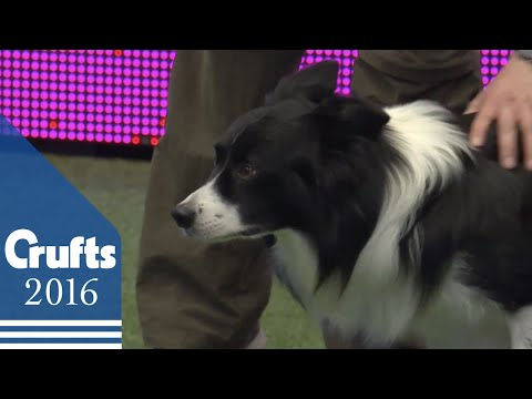 Agility - Kennel Club British Open Final - Jumping | Crufts 2016