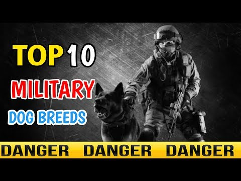 TOP 10 MILITARY DOG BREEDS / best military dog breeds