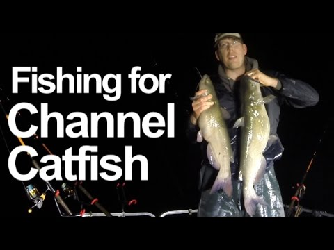 How to Catch Catfish from the Bank - Night fishing for catfish! ROD REEL GIVE AWAY from YouTube · High Definition · Duration:  18 minutes 16 seconds  · 76,000+ views · uploaded on 7/6/2017 · uploaded by Catfish and Carp