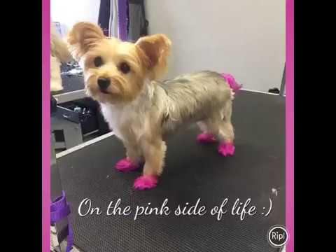 Clips N Snips Dog Grooming Dog Grooming Near Me Best Dog