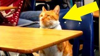 Diese Katze geht jeden Tag zur Schule, dann bekommt sie eine unglaubliche Überraschung!
