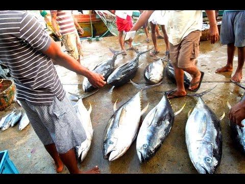 Шри-Ланка. Полный видео-отзыв.