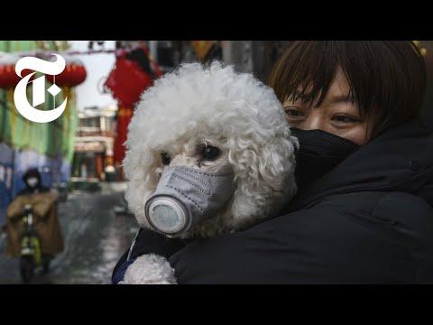 Coronavirus Reactions From Around The World | NYT News