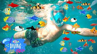Diving and Fun!Buceo y diversion!Дайвинг и развлечения!