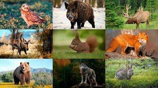 Как говорят животные. Звуки леса. Развивающее видео для детей. Лесные животные. Голоса животных