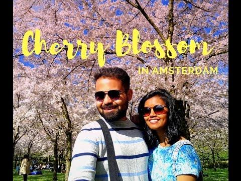 Cherry Blossom 2017 | Amsterdam | Let me Roam