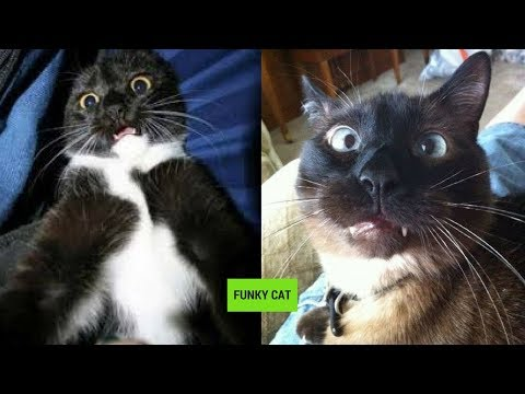 CATS WITH FUNNY FACE EXPRESSIONS 😸