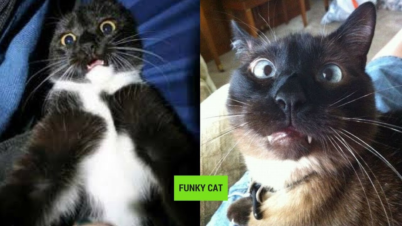 Download CATS WITH FUNNY FACE EXPRESSIONS 😸