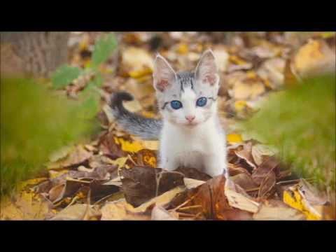 Beautiful Cats Hd Wallpaper Cute Kitten Images Youtube