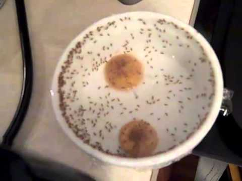 TRAP FRUIT FLIES EASILY  a Followup Video to the first 2