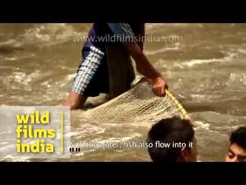 Fish killing festival of the Himalaya: Maund mela