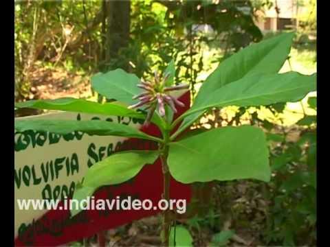 Wayanad Social Service Society - botanical development