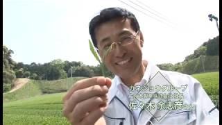 静岡県掛川市 佐々木製茶「深蒸し茶物語/茶葉への挑戦」