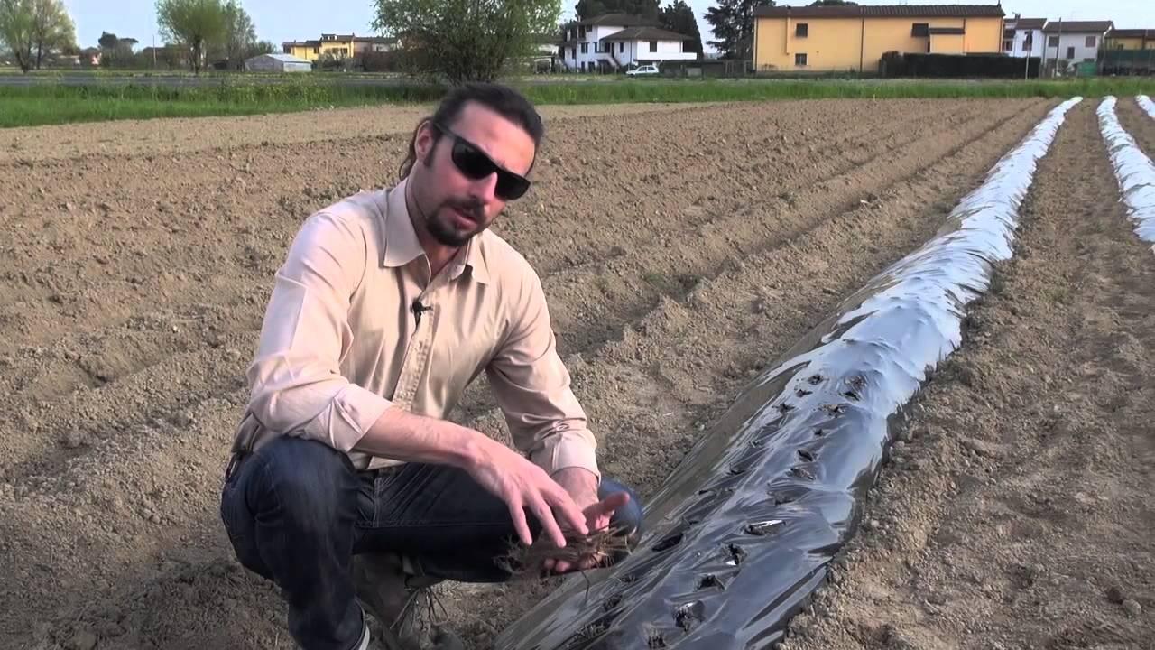 Lezione di agricoltura 2 preparazione letto di semina e semina youtube - Letto di semina ...