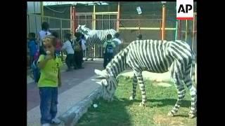 Gaza zookeepers draw crowds with zany zebras