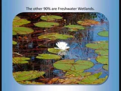 Introduction to Florida's Wetlands