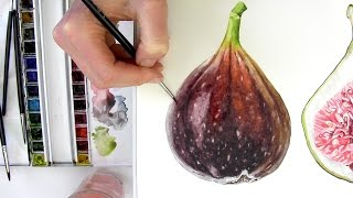 How to paint a realistic, velvety fig in watercolour with Anna Mason