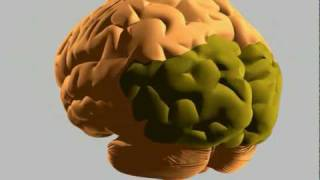 Repeat youtube video How the human brain works