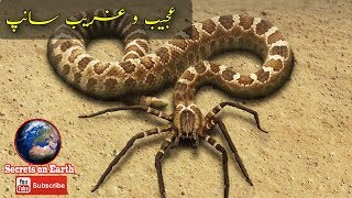 6 Most Unusual Snakes in the World in Urdu/Hindii | Incredible Facts and incidents About Snakes