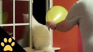 April Fools Pet Pranks: Compilation