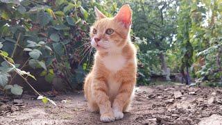 Relaxing Cat Video 167