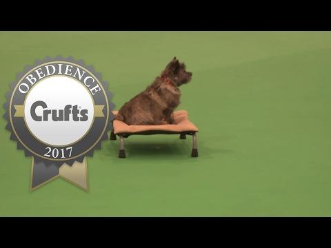 Obreedience - Scent - Part 1 | Crufts 2017