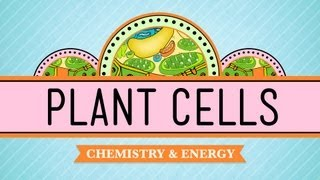 Crash Course: Biology: Plant Cells vs. Animal Cells thumbnail