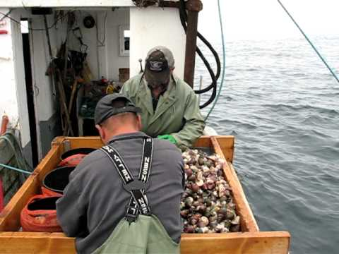 Whelk Fishing