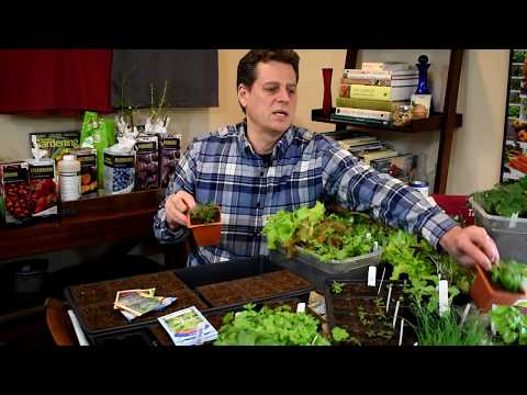 Seed Starting Herbs, Lettuces, Peppers & Starting Mix Basics - Gardening 101 Ep2