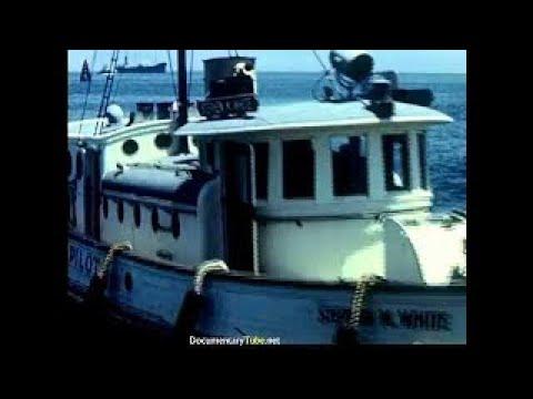 The Ship Harbor Pilot ()