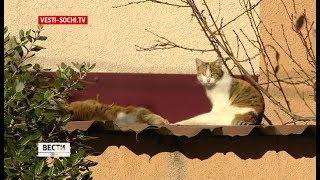 Краевой суд запретил отстреливать бездомных животных в Сочи