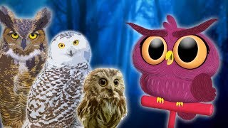 Owls for Kids |  Animals for Kids | Educational Videos for Kids