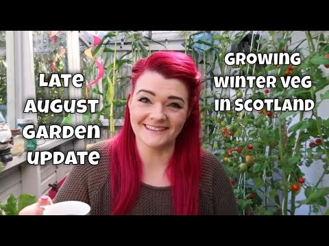 Growing Winter Veg in Scotland / Late August Garden Update / MoggyBoxCraft