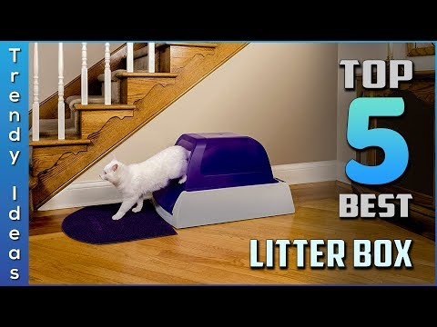 Top 5 Best Litter Boxes Review In 2020